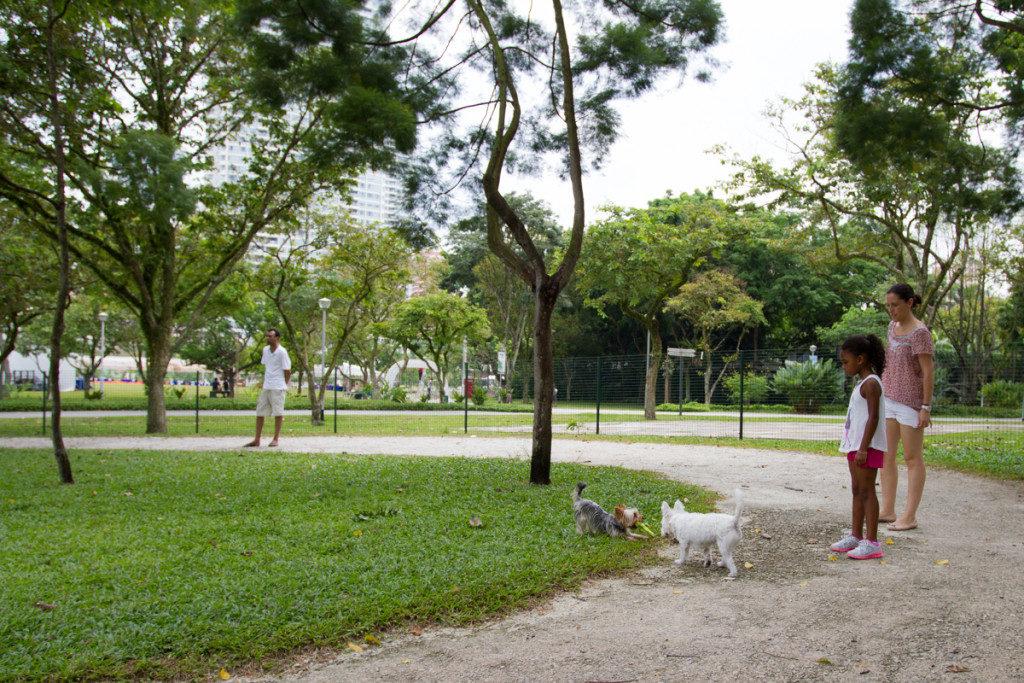 Bishan Park Dog Run | Vanillapup
