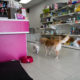 Pet Loft Singapore Grooming