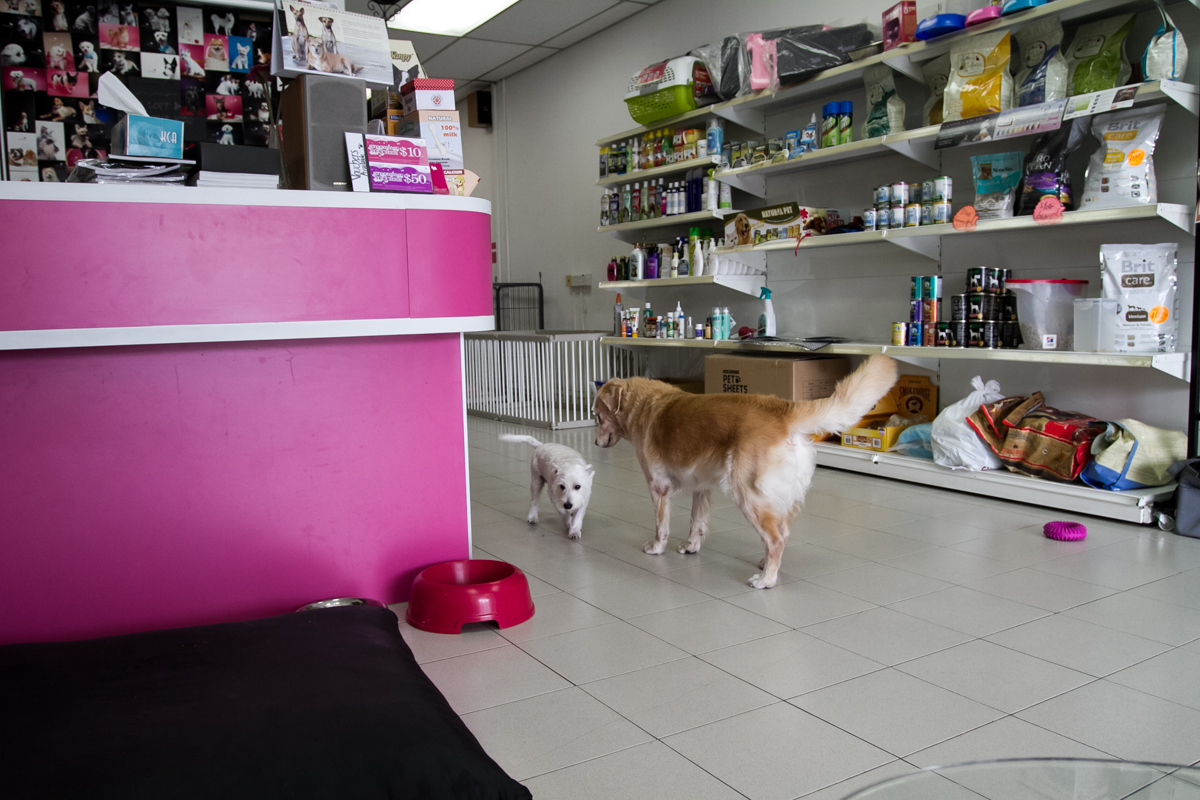 Pet Loft Singapore Grooming