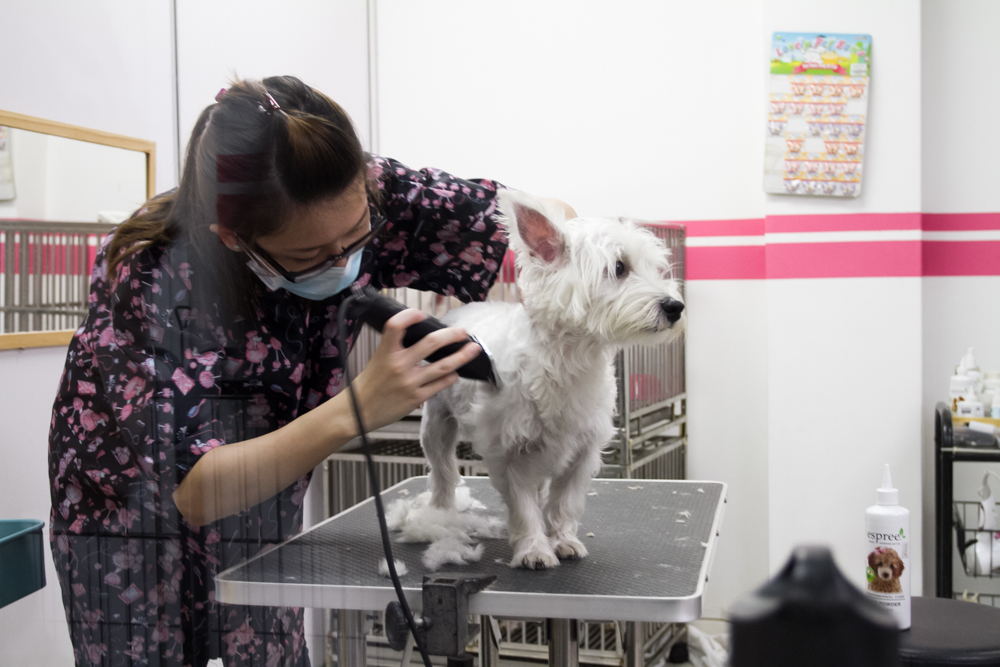 Getting Shaved - Pet Loft Singapore Grooming