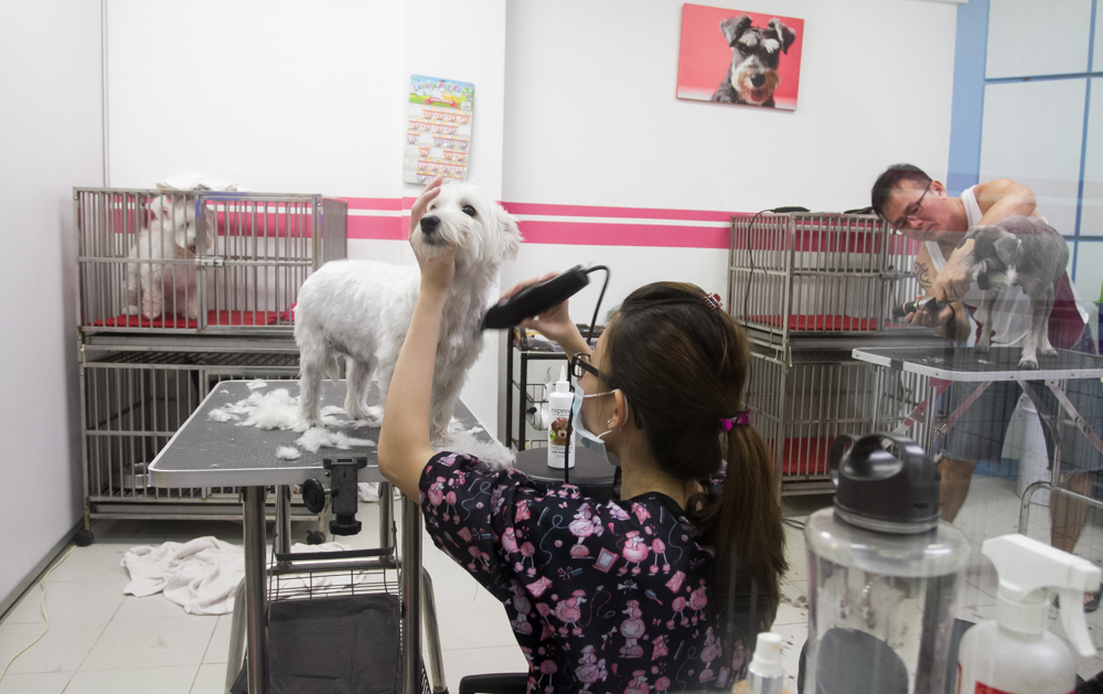 Being Obedient - Pet Loft Singapore Grooming