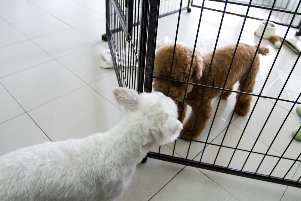 Meeting Friends - Pet Loft Singapore Grooming