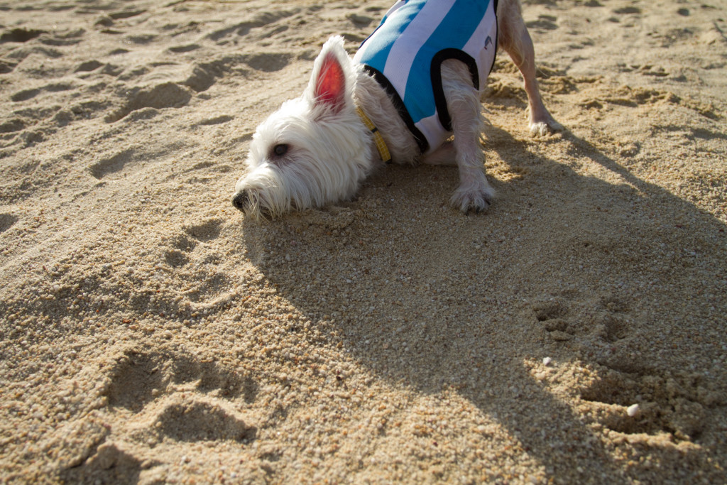 Dog-friendly Tanjong Beach, Sentosa | Vanillapup