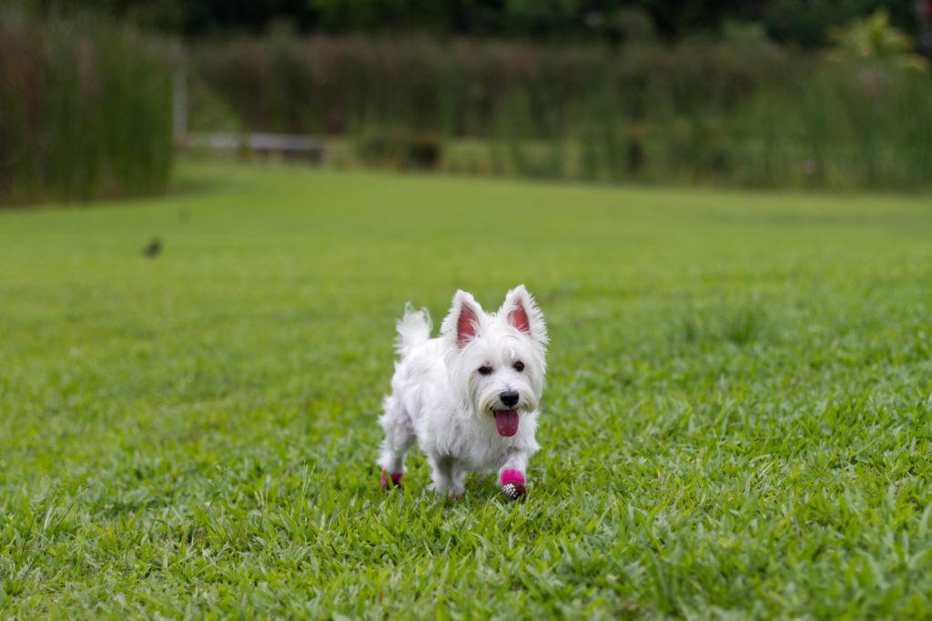 Dog-friendly Seng Kang Riverside Park   Vanillapup