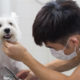 Likeable Pet Mobile Pet Grooming 1