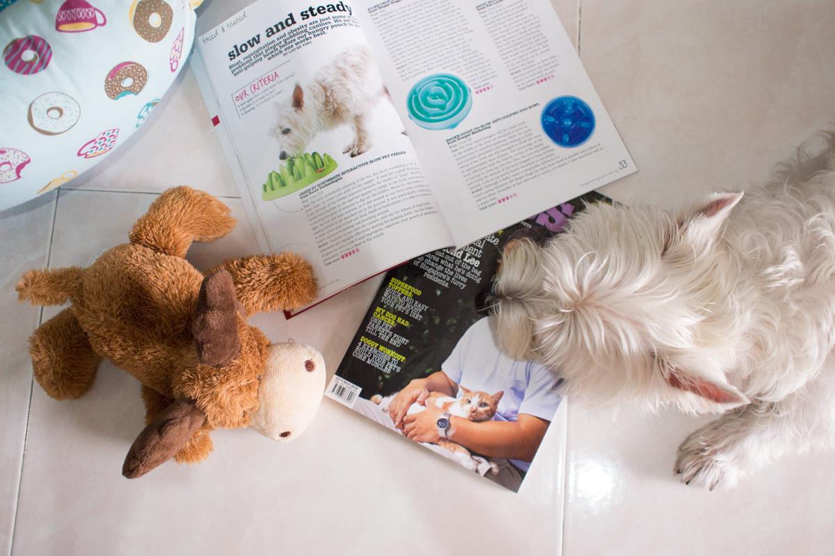 Vanillapup in Pets Magazine
