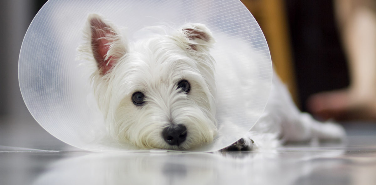 Pet Insurance in Singapore   Vanillapup