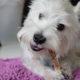 Choosing Treats for Dogs | vanillapup