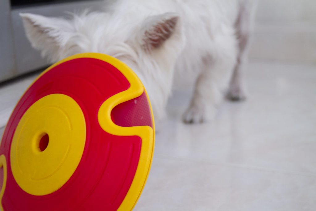 Nina Ottosson Dog Treat Maze Toy Review | Vanillapup