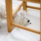 5 Indoor Activities To Do With Your Dog - Hidden Treasure | Vanillapup