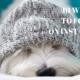 10 Cute Westies to Follow on Instagram   Vanillapup