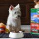 K9 Natural Raw Dog Food Lamb Feast | Vanillapup