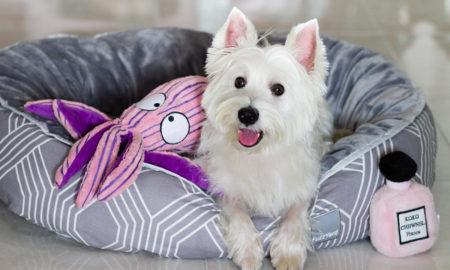Vanillapup Picks: FuzzYard Bed and KONG CuteSeas | Vanillapup