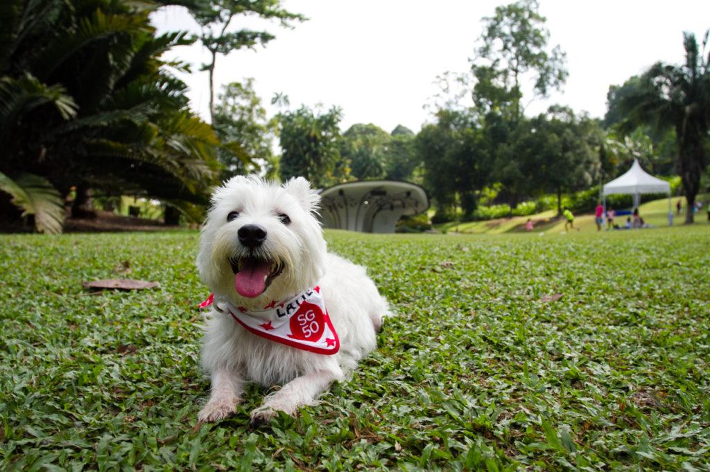 SG50 Celebration Dog Bandana | Vanillapup