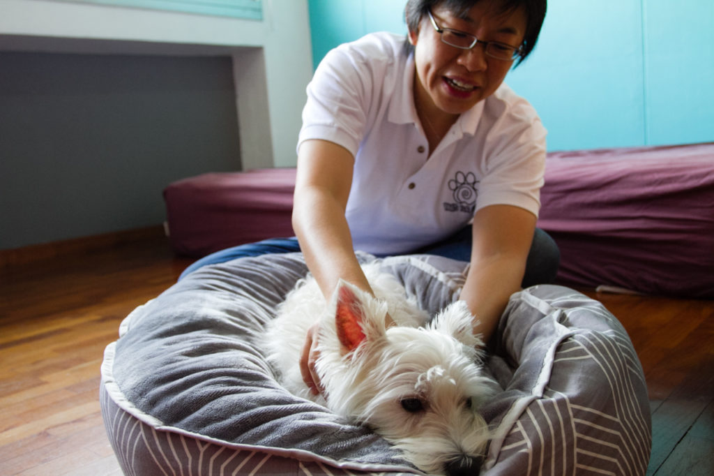 Paws Fur Life Dog Massage | Vanillapup