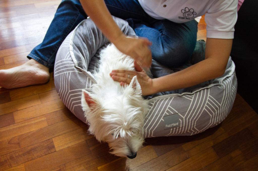 Paws Fur Life Canine Effleurage Massage | Vanillapup