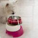 Choosing Dog Bowls | Vanillapup