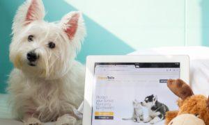 Happy Tails Pet Insurance   Vanillapup