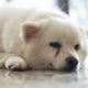 Dog Tear Stains Causes and Removal