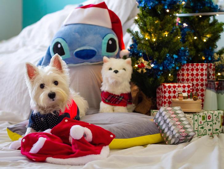 10 Dog Photography Tips Christmas | Vanillapup