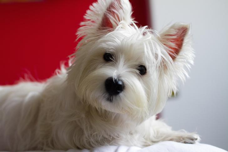 10 Dog Photography Tips | Vanillapup