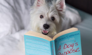10 Must Read Books for Dog Lovers | Vanillapup