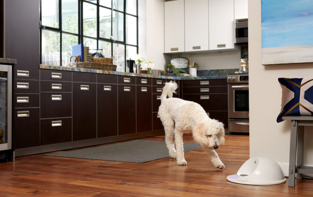 CleverPet Dog Game Console   Vanillapup
