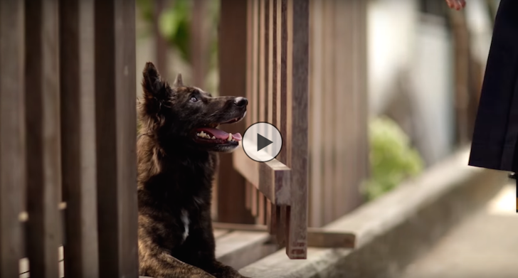KTB Thai Dog Video Ad | Vanillapup