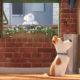 The Secret Life of Pets Movie | Vanillapup