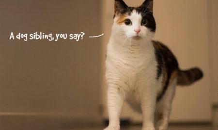 Introduce Dog to Cat | vanillapup