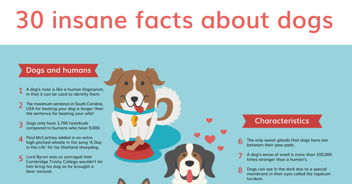 30 Dog Fun Facts You May Have Never Known | Vanillapup