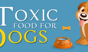 Toxic Food for Dogs | Vanillapup