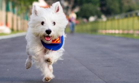 Dog Recall Training | Vanillapup