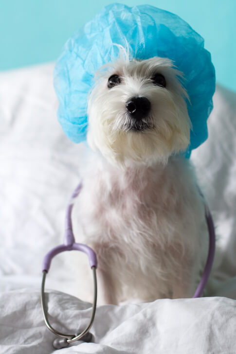 Things Dog Owners Should Know About Keyhole Surgery   Vanillapup