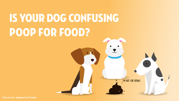 Coprophagia Why Do Dogs Eat Poop | Vanillapup