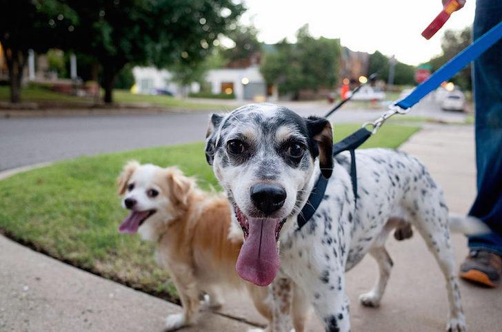 Dogs Walking Outside