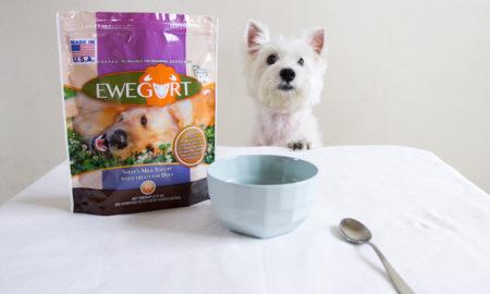 Latte wants Ewegurt now | Vanillapup