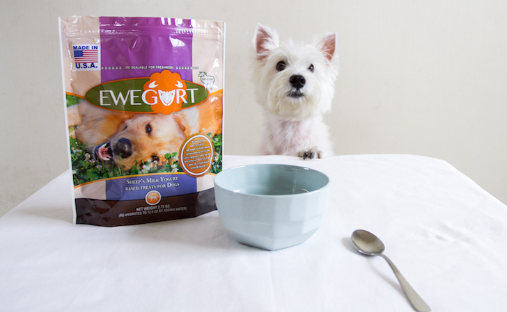 Latte wants Ewegurt now | Vanillapup