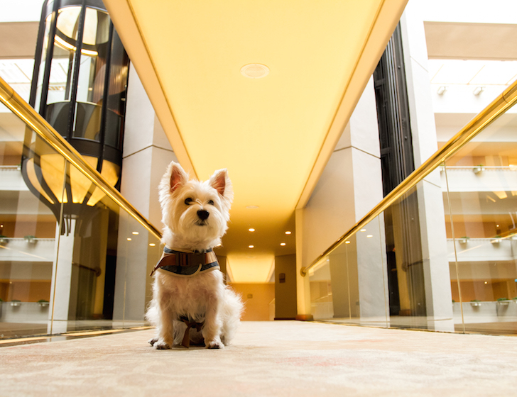 Pet-friendly Regent Singapore Hotel Staycation Lift Lobby | Vanillapup