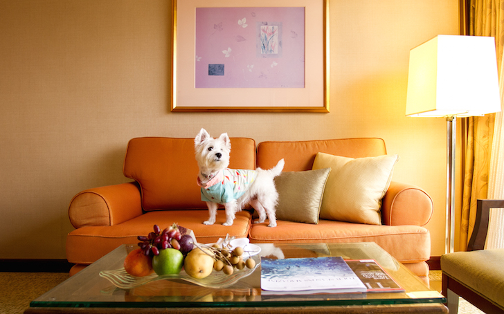 Pet-friendly Regent Singapore Hotel Staycation | Vanillapup