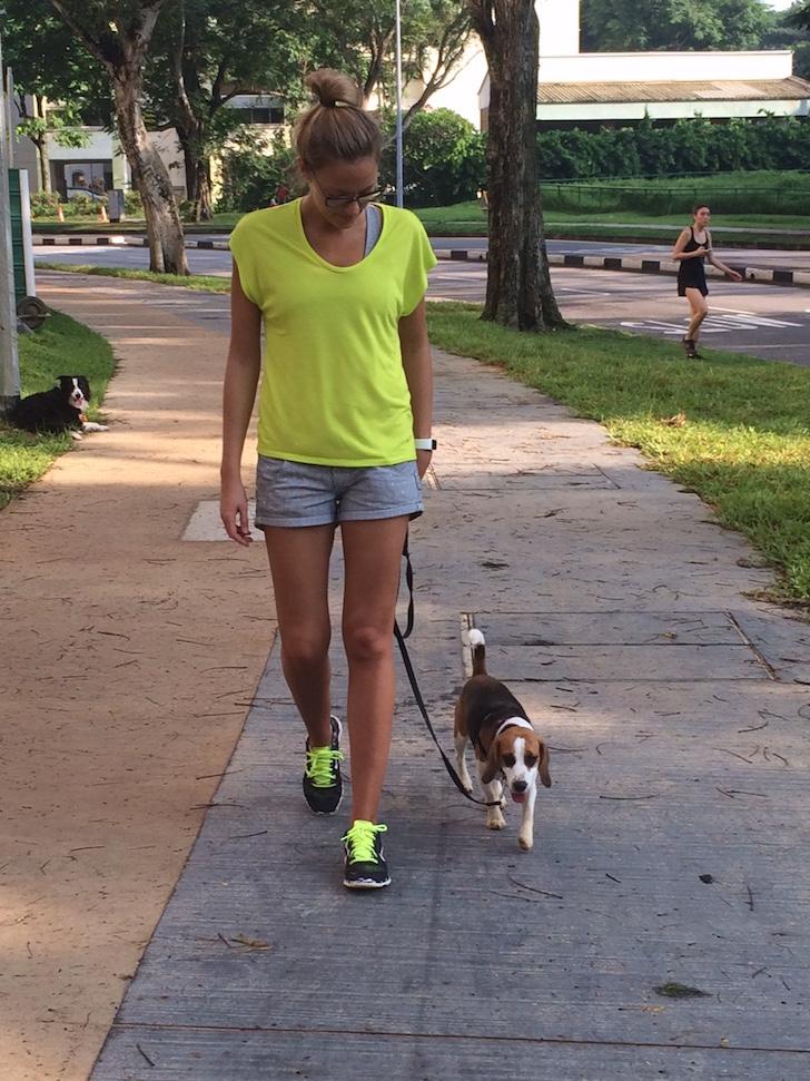 Polite Leash Walking Example 1   Vanillapup