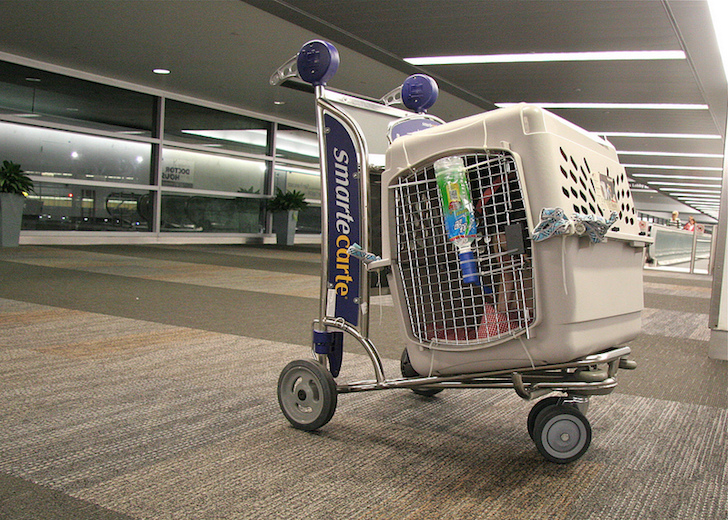 Dog Airline-approved Travel Crate   Vanillapup
