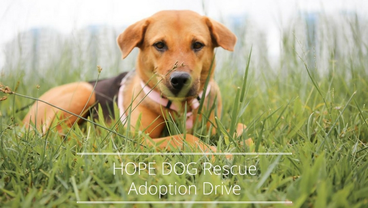 HOPE DOG Rescue Adoption Drive | Vanillapup