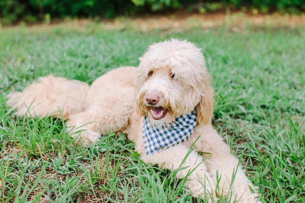 Wild Hound Outfitters Dog Bandana   Vanillapup