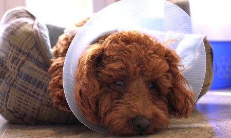 Why does my dog have rashes and pimples? | Vanillapup