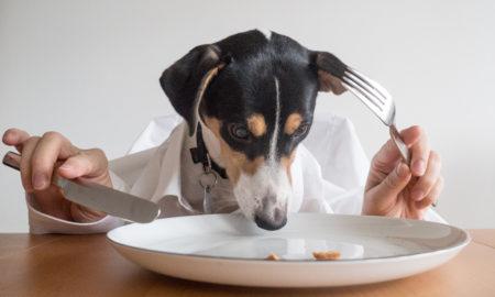 Fussy Dog Picky Eater | Vanillapup