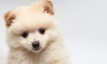 Understanding Dog Diabetes | Vanillapup
