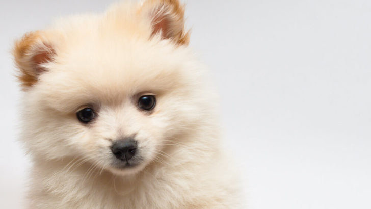 Ask a Vet: Is Diabetes in Dogs Genetic and How Can We Prevent It?