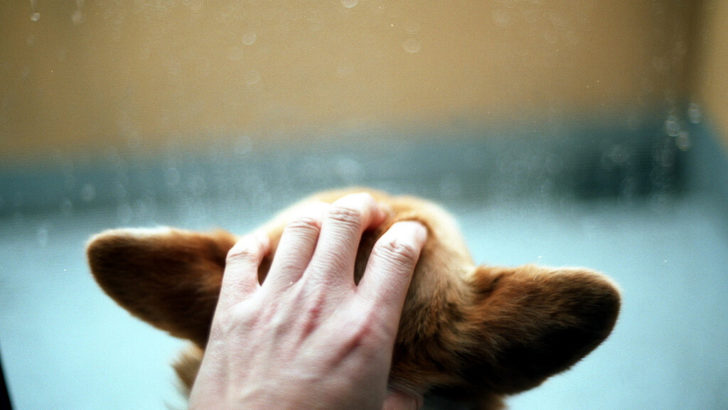How to Solve Your Dog's Thunder Phobia