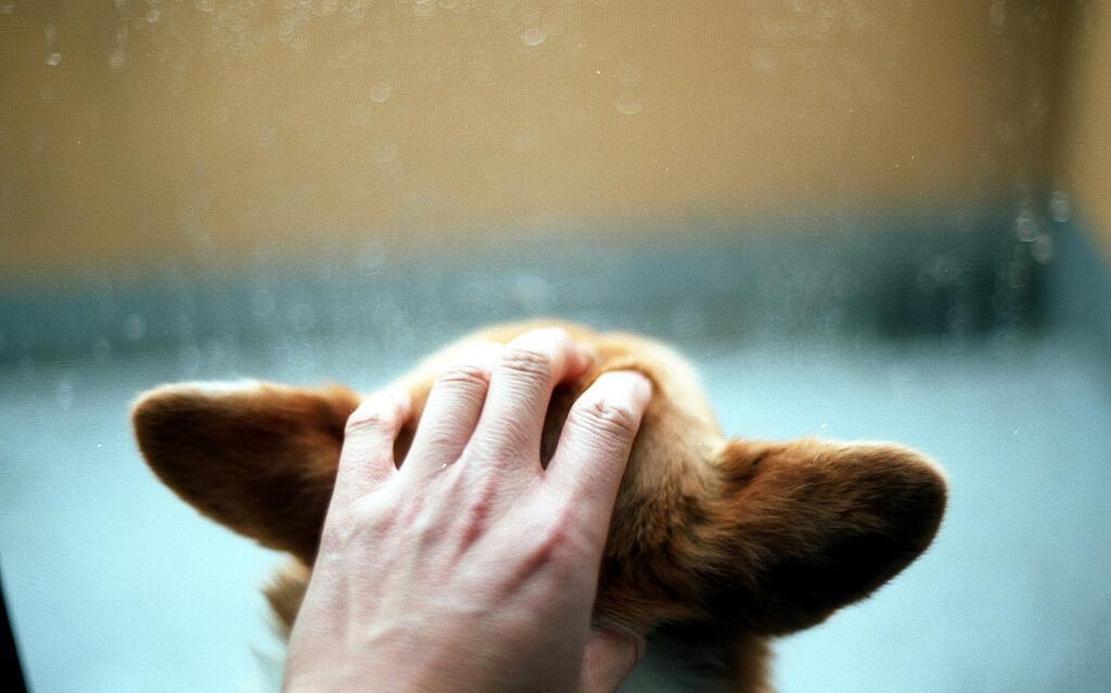 Dogs Thunder Phobia